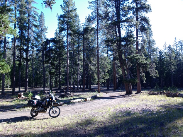 Motorcycle among tall trees