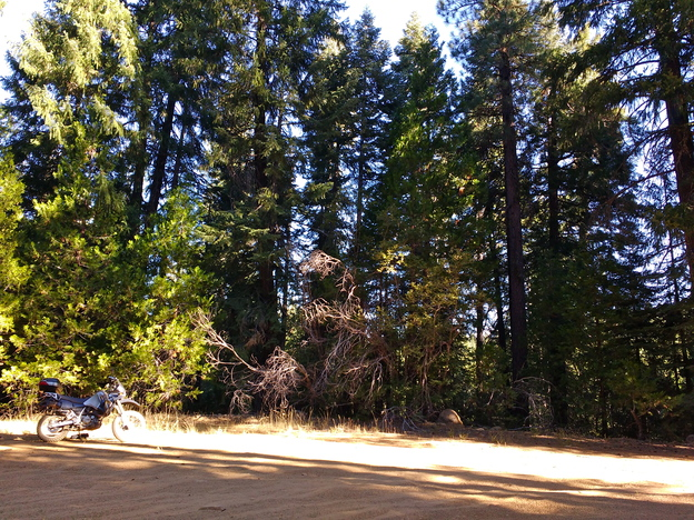 Trees in Plumas National Forest